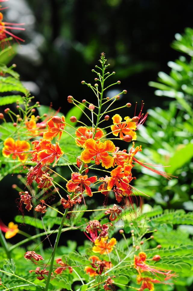 紅蝴蝶 - 照片5