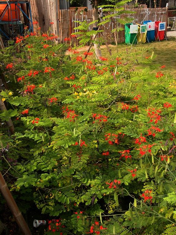紅蝴蝶 - 照片6