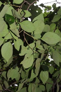 朴樹 - 照片1