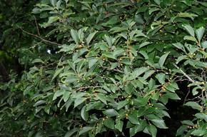 朴樹 - 照片2